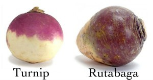 turnip-vs-rutabaga-300x158